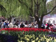 tulip top gardens in full bloom with band playing